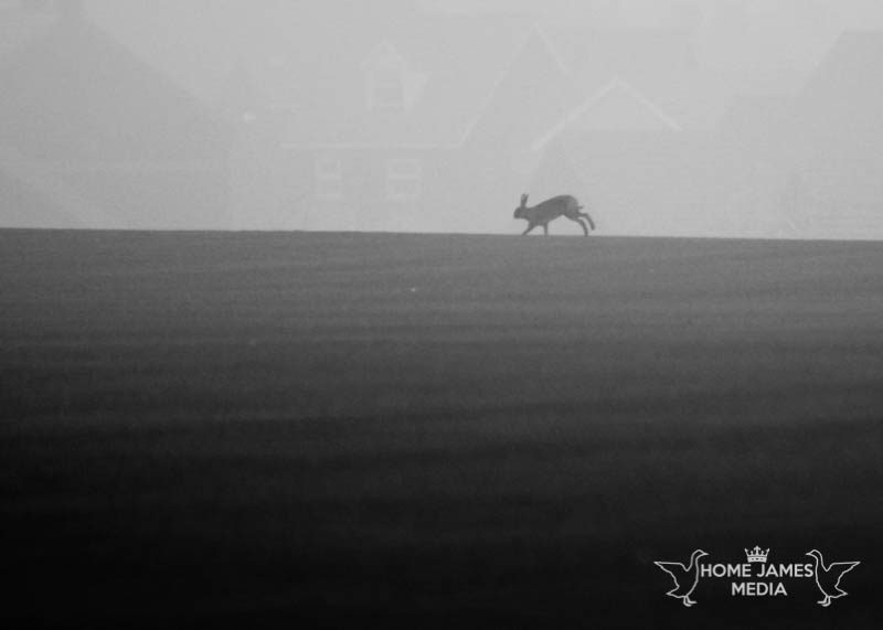 Hare Silhouette Photo | Lincolnshire Landscape Photography by Robin Ling