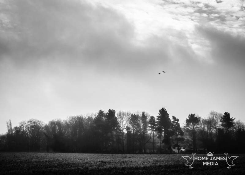 Lincolnshire Landscape of Silhouetted Woodland Near Redbourne Hall | Lincolnshire Landscape Photography by Robin Ling