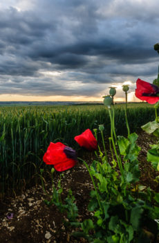The Wolds Poppies Worlaby Lincolnshire Farmland Sunset Landscape Photo