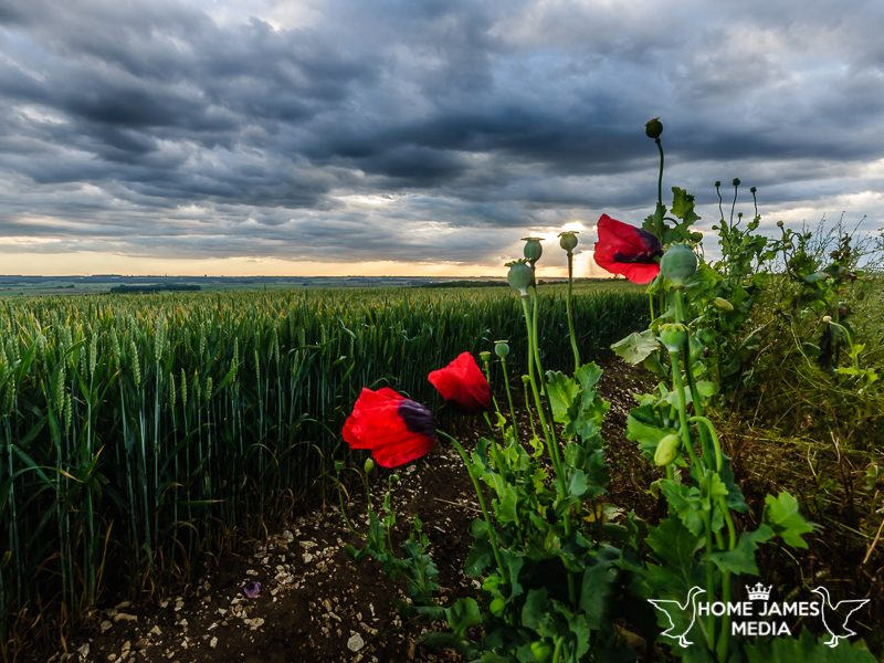 The Wolds Poppies Worlaby Lincolnshire Farmland Sunset Landscape Photo | Lincolnshire Landscape Photography by Robin Ling
