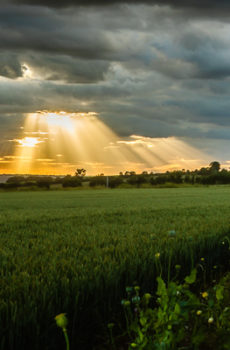 Sunburst at Worlaby Lincolnshire