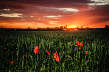 Sunset on the Lincolnshire Wolds| Lincolnshire Landscape Photography by Robin Ling