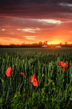 Worlaby Wold Tops at Sunset | Lincolnshire Landscape Photography by Robin Ling