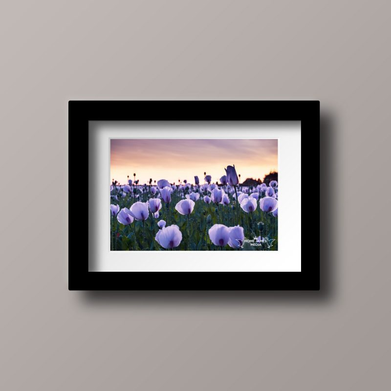 Poppies Black Frame - Landscape