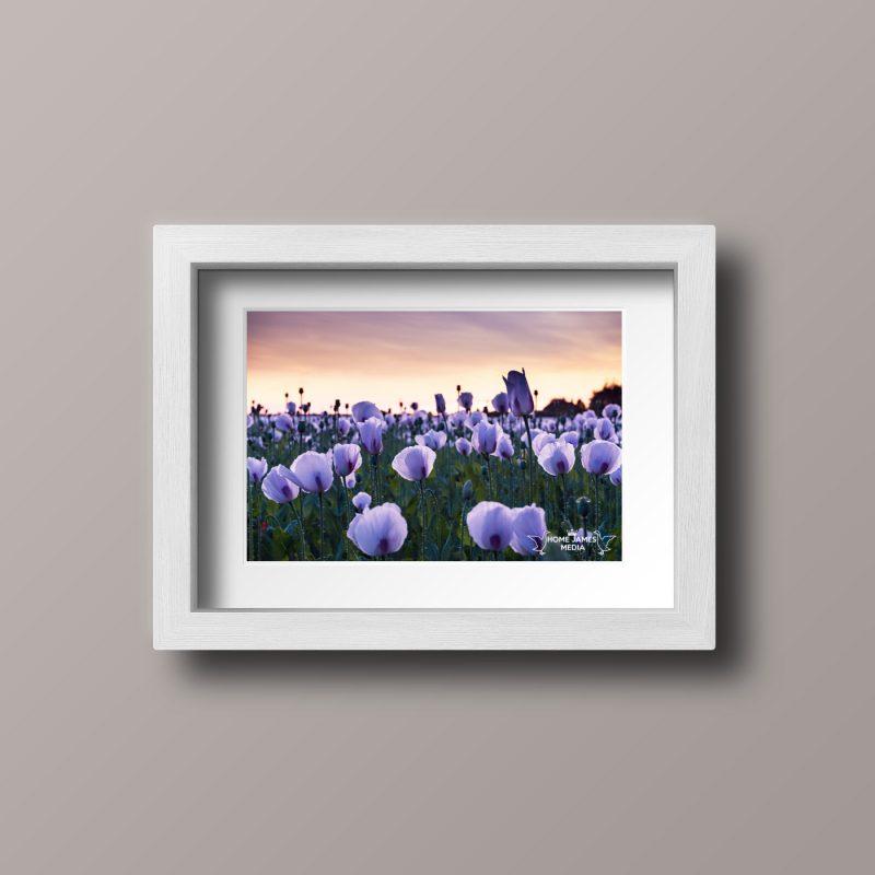 Poppies White Frame - Landscape
